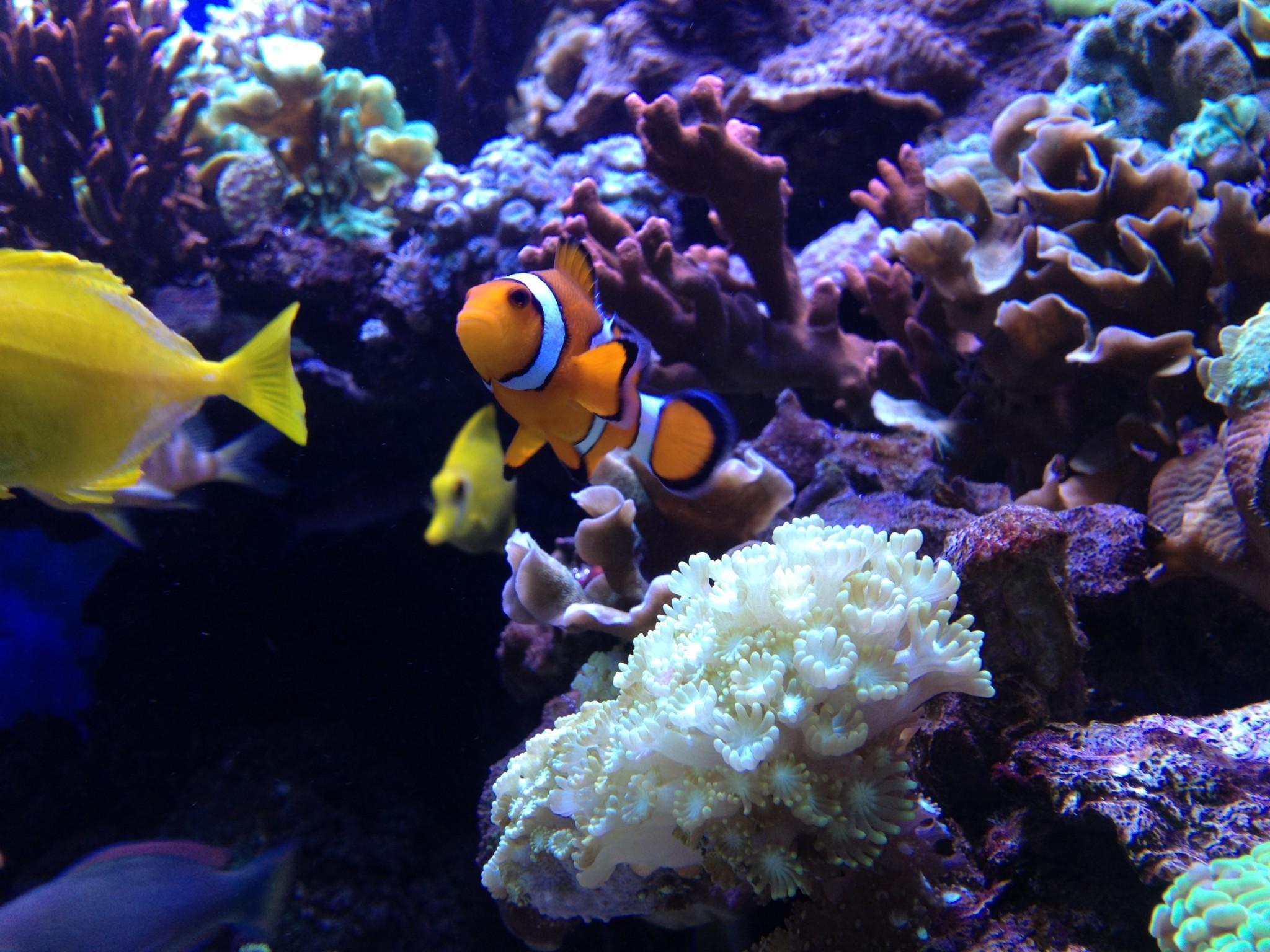 Zeewater-aquarium