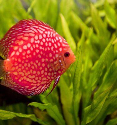 Tropisch Aquarium