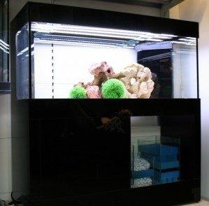 u bepaalt daarom zelf de wijze van filtratie de meest voorkomende filtermogelijkheden zijn biologisch filter in het meubel door
