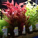 Planten & verlichting
